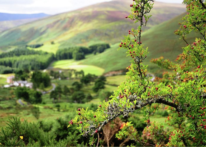 Jenny Rainbow Fine Art Photography Greeting Card featuring the photograph Hawthorn Branch With View To Wicklow Hills. Ireland by Jenny Rainbow