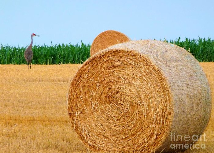 Hay Greeting Card featuring the photograph Hay Bale With Crane by Michael Garyet