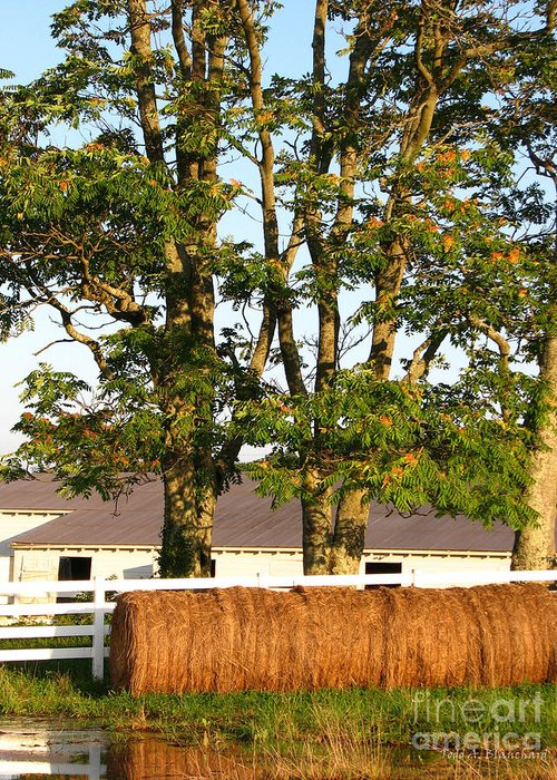 Landscape Greeting Card featuring the photograph Hay Bales And Trees by Todd A Blanchard