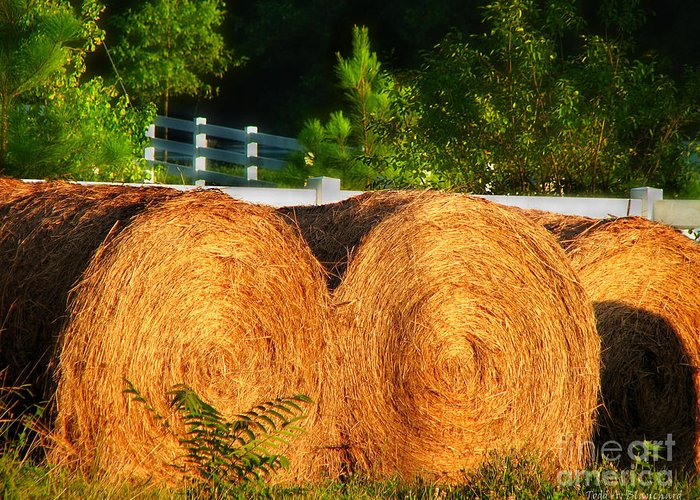 Landscape Greeting Card featuring the photograph Hay Bales by Todd A Blanchard