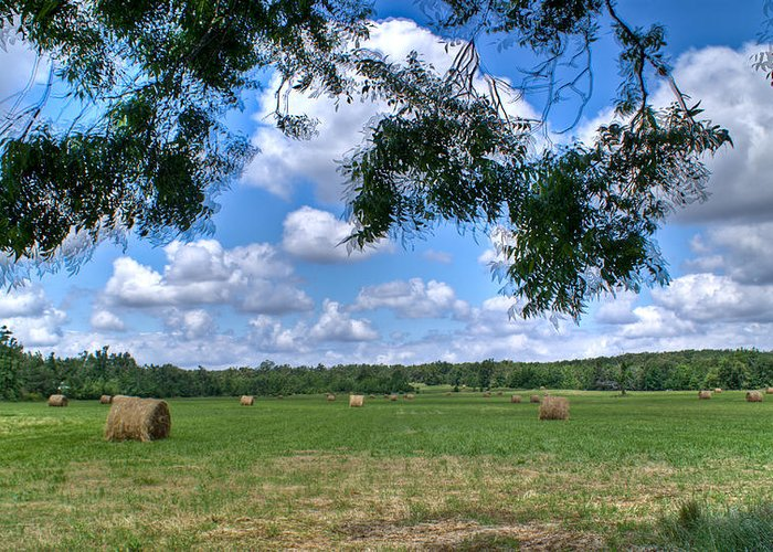 Hay Greeting Card featuring the photograph Hay Field In Summertime by Douglas Barnett