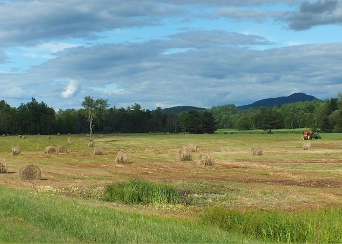 Landscape Greeting Card featuring the photograph Hay Fields In The Adirondacks by Patricia Fitz-Gerald