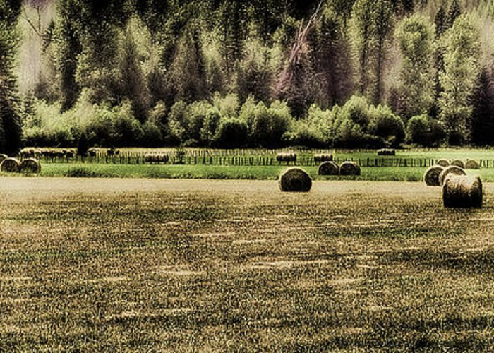 Hay Bales Greeting Card featuring the photograph Hay Harvest by David Patterson