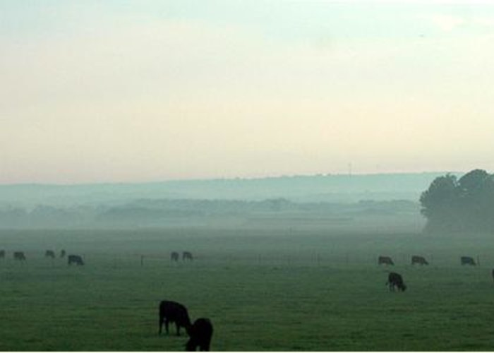 Herd Greeting Card featuring the photograph Hazy Grazing by Lynn Reid