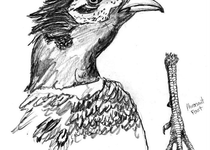 Iowa Greeting Card featuring the drawing Head And Foot Of A Chinese Ringneck Rooster Pheasant by Kevin Callahan