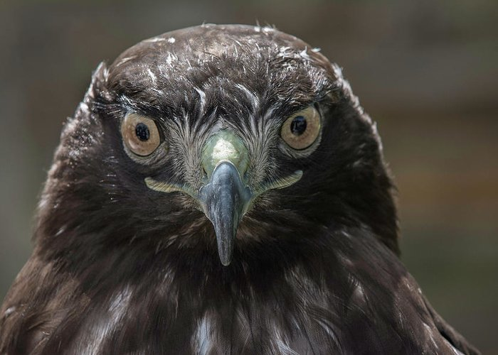 Wildlife Greeting Card featuring the photograph Hears Looking At You by Duane Deboer