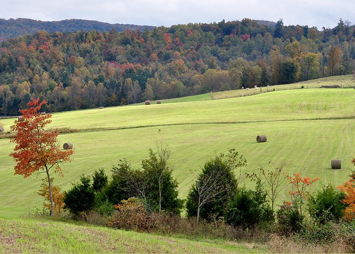 Landscapes Greeting Card featuring the photograph Heart Of The Country by Jan Amiss Photography
