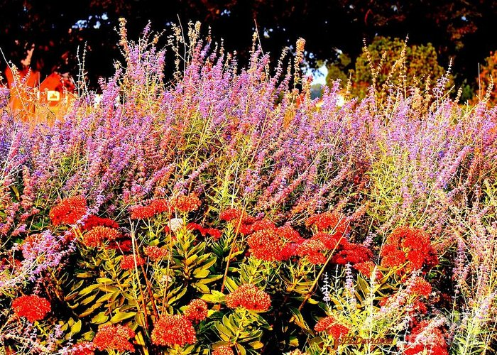 Gardens Greeting Card featuring the photograph Heather And Sedum by Patricia L Davidson