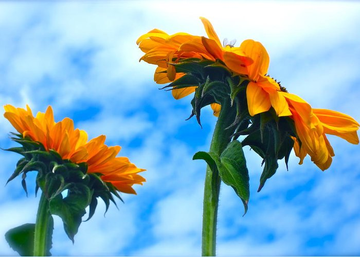 Photograph Of Sunflowers Greeting Card featuring the photograph Heaven Above ... by Gwyn Newcombe