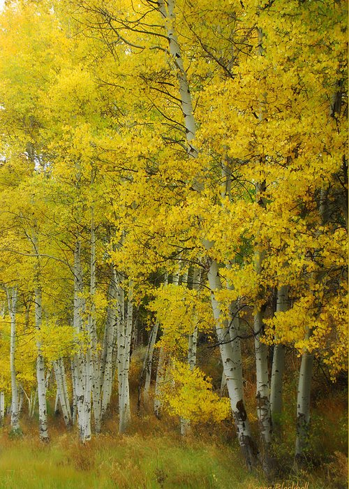 Birch Trees Greeting Card featuring the photograph Heavenly Light by Donna Blackhall
