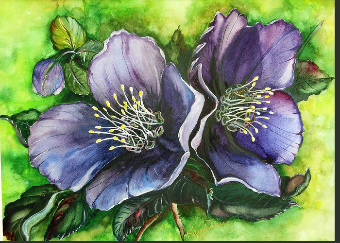 Flower Painting Botanical Painting Original W/c Painting Helleborous Painting Greeting Card featuring the painting Helleborous Blue Lady by Karin Dawn Kelshall- Best