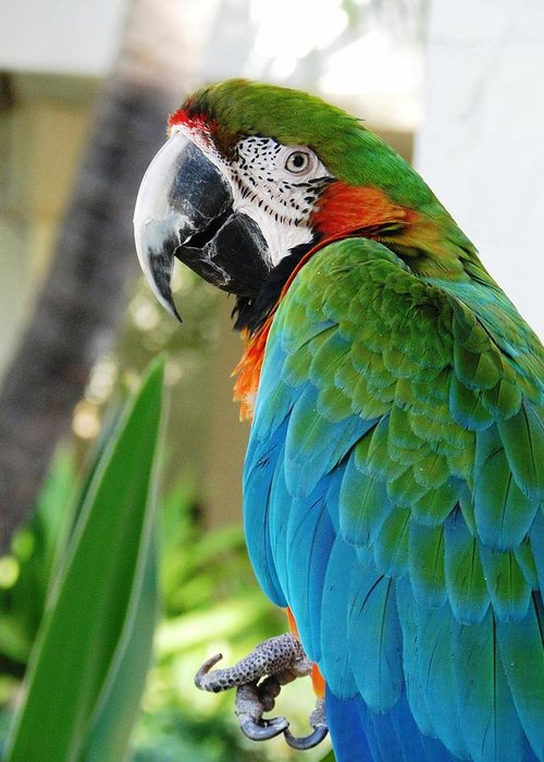 Macaw Greeting Card featuring the photograph Hello There by Carol Reynolds
