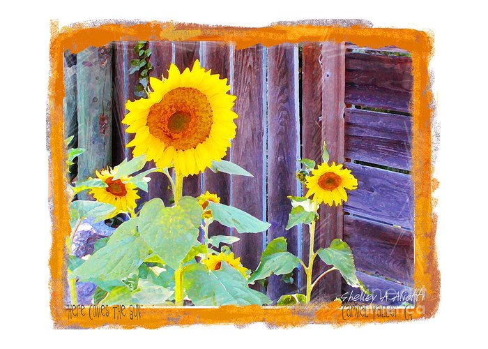 Girasole Greeting Card featuring the photograph Here Comes The Sun by Shelley A Aliotti