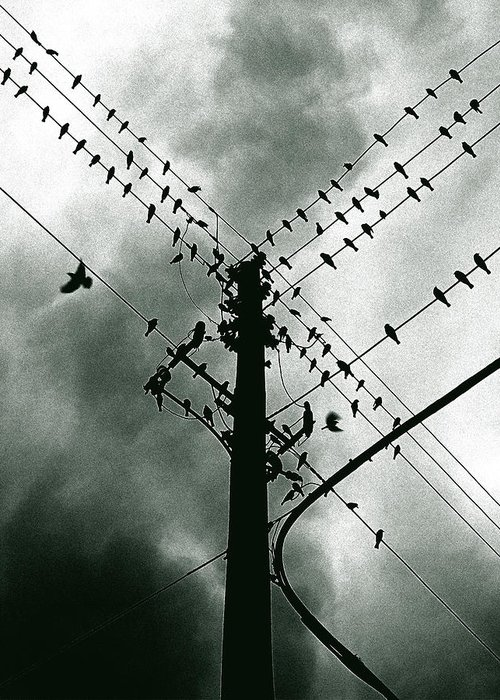 Birds Greeting Card featuring the photograph Here It Comes by Justin Dyal