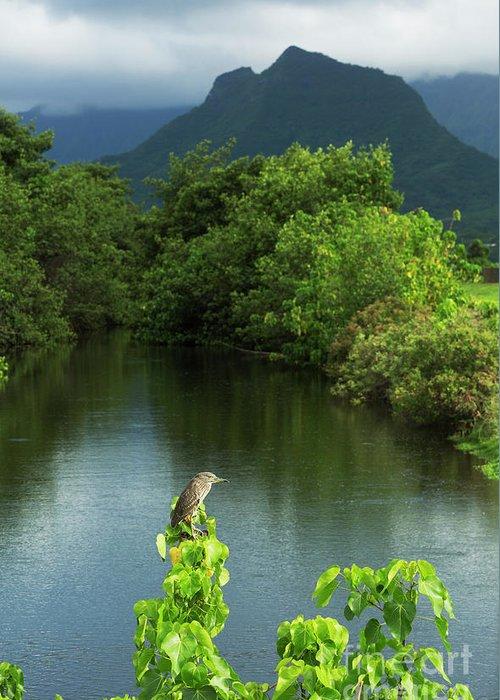 Hawaii Greeting Card featuring the photograph Heron At Kawainui Marsh by Charmian Vistaunet
