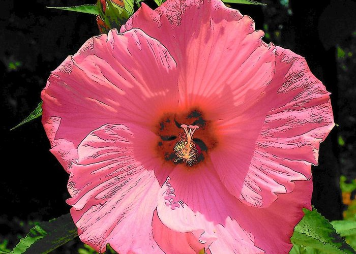 Hibiscus Greeting Card featuring the photograph Hi Biscus by Vijay Sharon Govender