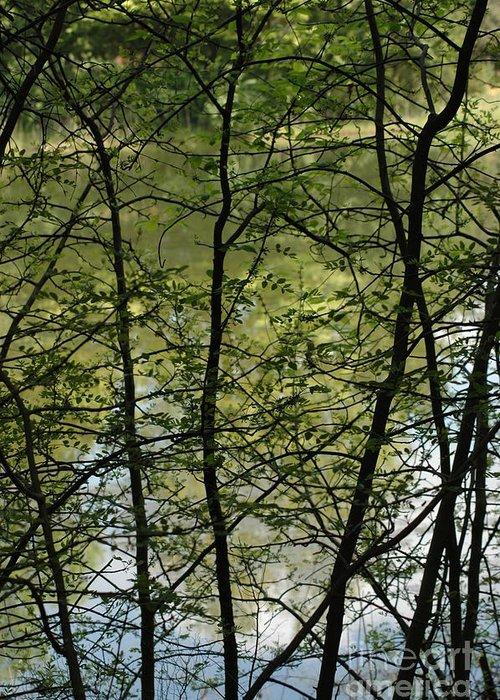 Usa Greeting Card featuring the photograph Hidden Pond Natural Fence by LeeAnn McLaneGoetz McLaneGoetzStudioLLCcom