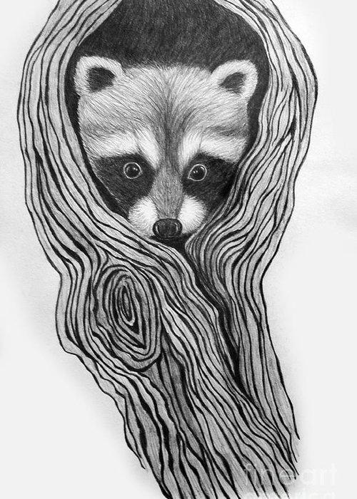 Raccoon Drawings Greeting Cards