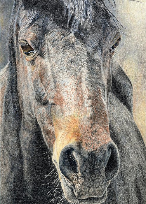 Dressage Horse Greeting Cards