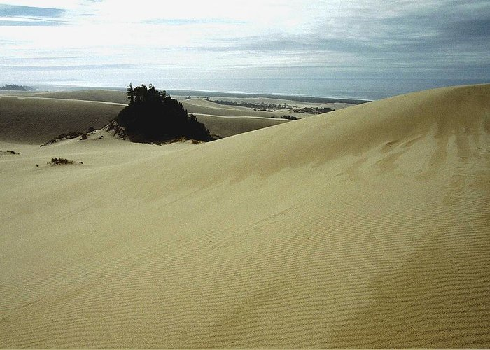 Oregon Dunes National Recreation Area Greeting Card featuring the photograph High Dunes 1 by Eike Kistenmacher