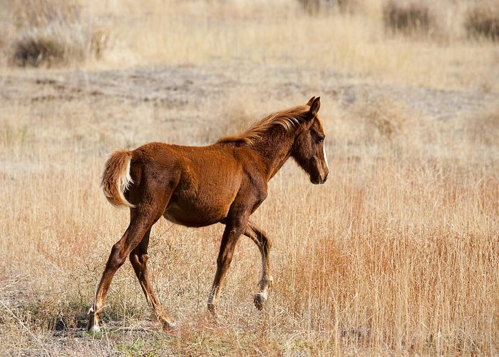 Mustang Greeting Card featuring the photograph High Stepping by Mike Dawson