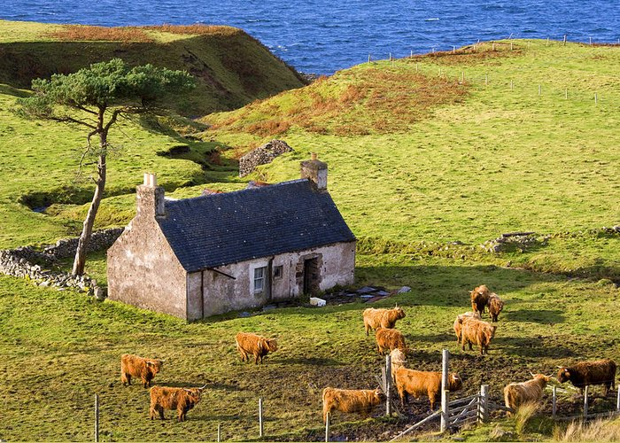 Scotland Greeting Card featuring the photograph Highland Cottage With Highland Cattle by John McKinlay
