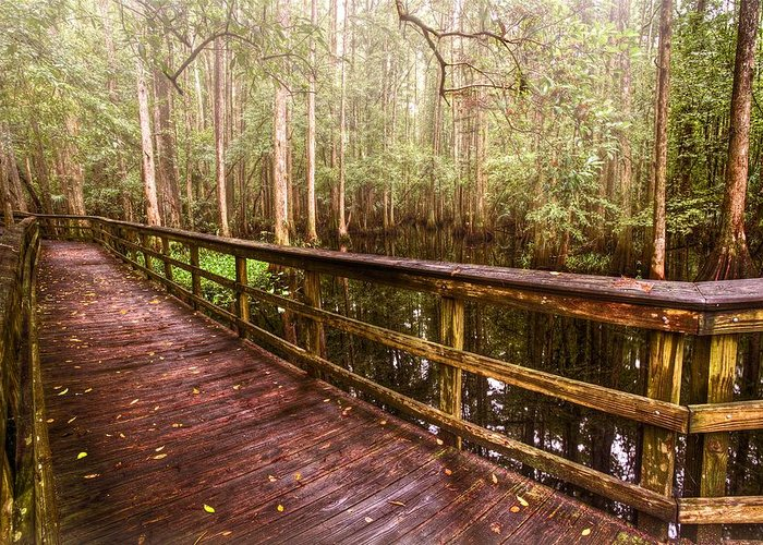 Everglades Greeting Card featuring the photograph Highlands Hammock by Debra and Dave Vanderlaan