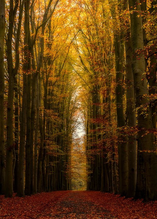 Autumn Greeting Card featuring the photograph Highway To Heaven by Martin Podt