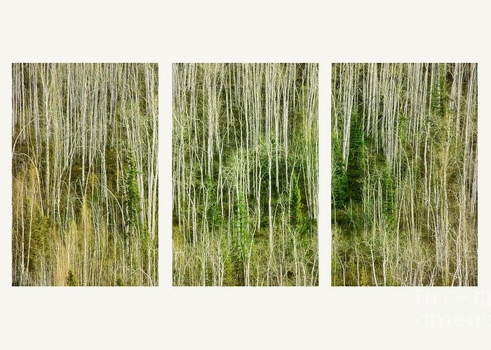 Lines Greeting Card featuring the photograph Hillside Forest by Priska Wettstein