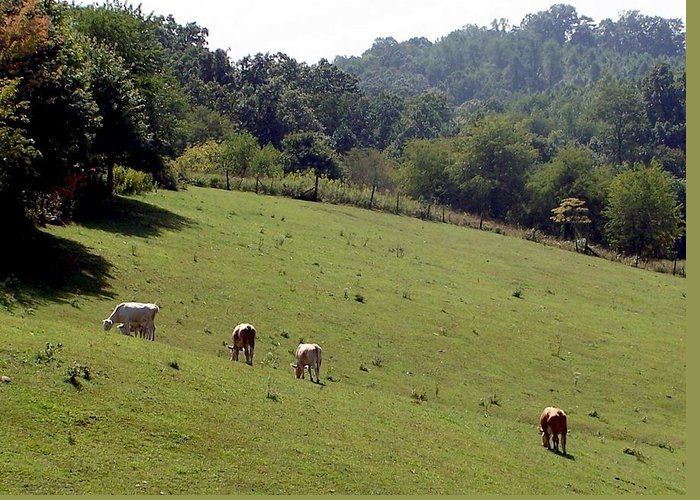 Nature Greeting Card featuring the photograph Hillside Grazing by Cumberland Studios