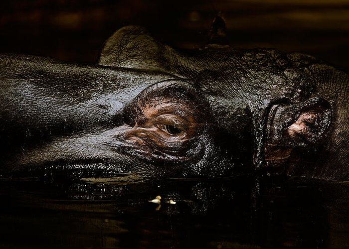 Animals Greeting Card featuring the photograph Hippo by Joerg Lingnau