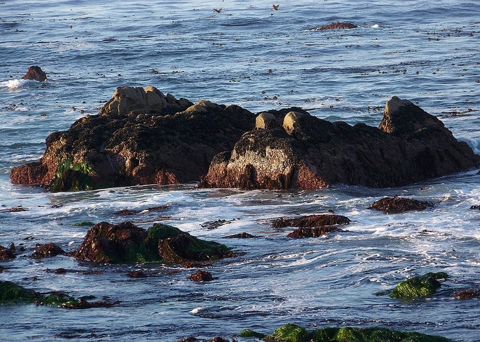 Seascape Greeting Card featuring the photograph Hippo Rock by Maggie Cruser