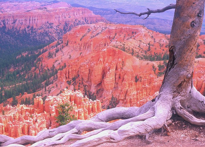 Utah Greeting Card featuring the photograph Holding On by Dave Hampton Photography