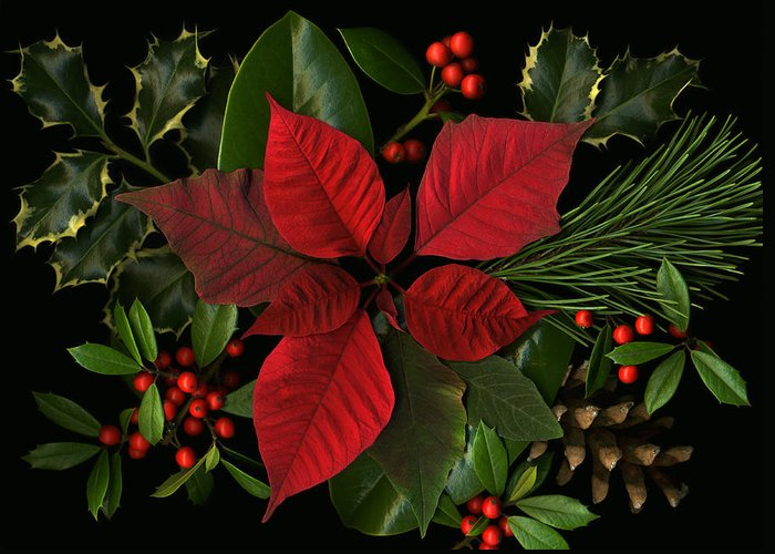 Poinsetta Greeting Card featuring the photograph Holiday Greenery by Deborah J Humphries