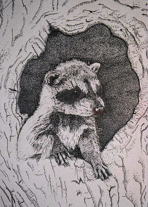 Raccoon Greeting Card featuring the drawing Home by Debra Sandstrom