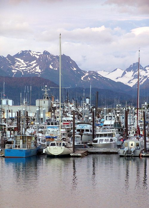 Homer Alaska Greeting Card featuring the photograph Homer Harbor by Marty Koch
