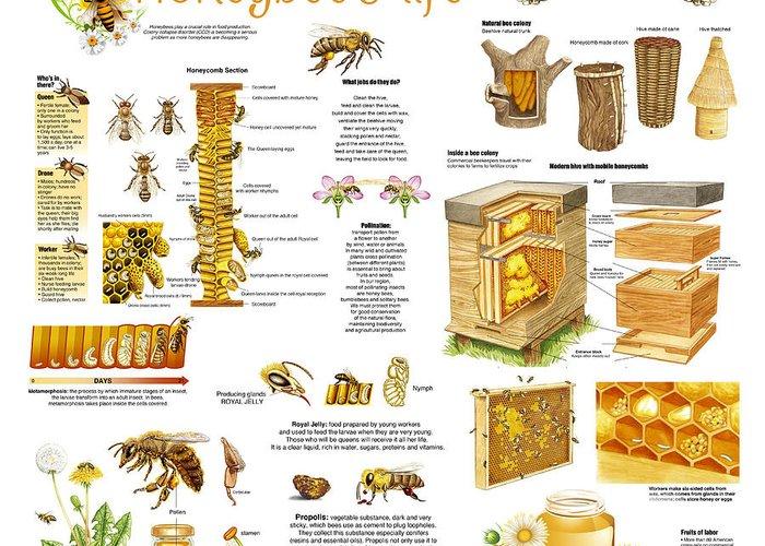 Honeybee Colonies Greeting Cards
