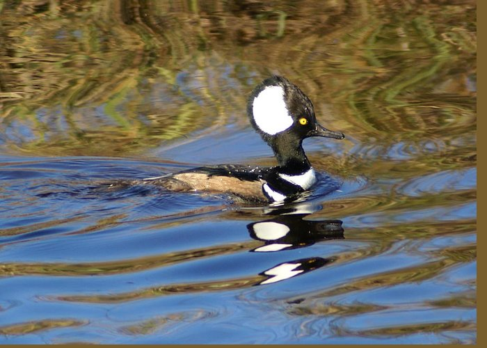 Duck Greeting Card featuring the photograph Hooded Mersanger by Debbie May