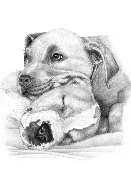 Pit Bull Greeting Card featuring the drawing Hope And Innocence by Deanna Maxwell