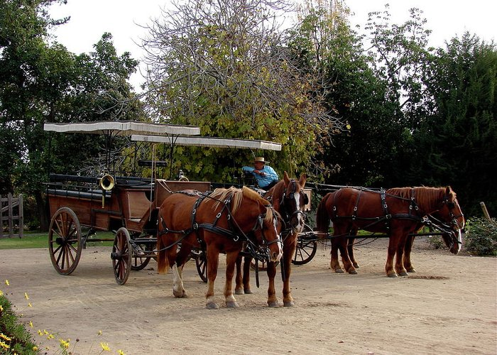 Colchagua Greeting Card featuring the photograph Horse And Carriage by Brett Winn
