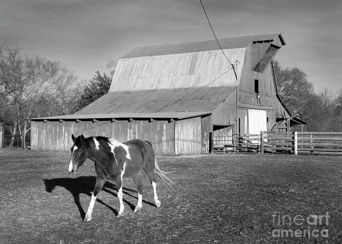 America Greeting Card featuring the photograph Horse And Home by Arni Katz