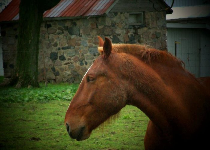 Horse Greeting Card featuring the photograph Horse And Shed by Michael L Kimble