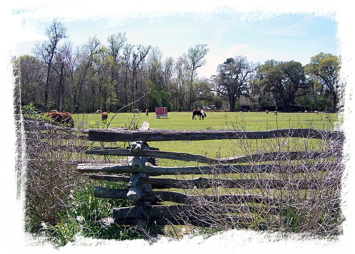 Horses Greeting Card featuring the photograph Horse Farm by Ralph Perdomo