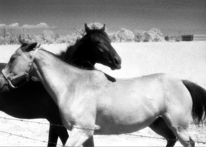Horses Greeting Card featuring the photograph Horse Friends Two by Lyle Crump