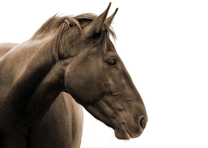 Horse Head Greeting Card featuring the photograph Horse Head Study by Heather Swan