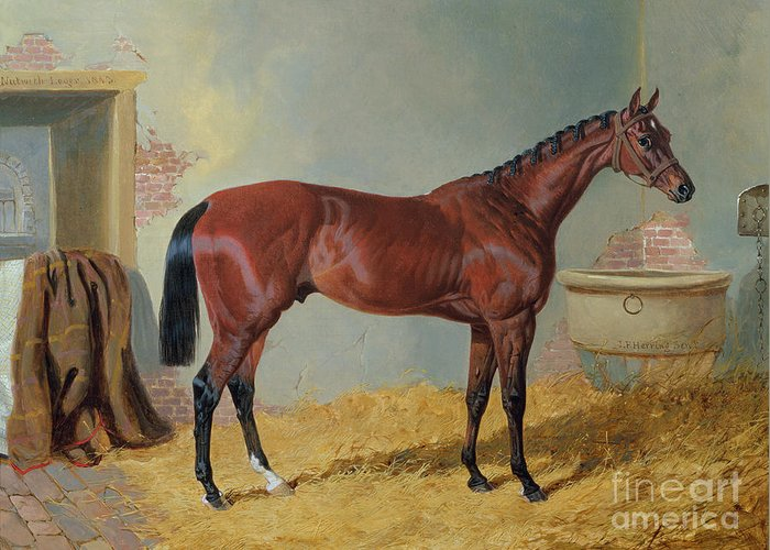 Mr S. Wrather's 'nutwith' In A Stable (oil On Canvas) By John Frederick Herring Snr (1795-1865) Greeting Card featuring the painting Horse In A Stable by John Frederick Herring Snr