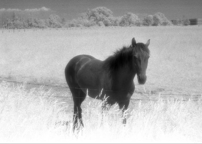Horse Greeting Card featuring the photograph Horse In A Summer Dreamfield by Lyle Crump