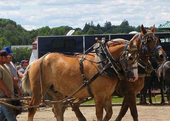 Horses Greeting Card featuring the photograph Horse Pull I by Melissa Parks