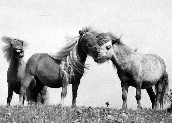 Greeting Card featuring the photograph Horses 8 by Stephen Harris