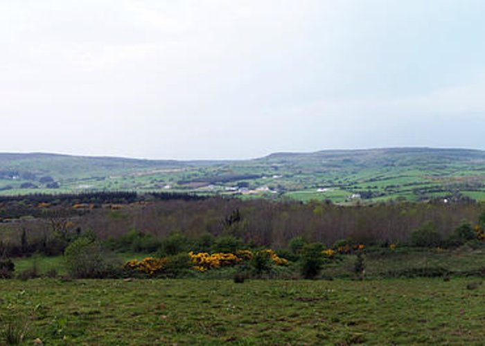 Ireland Greeting Card featuring the photograph Horses At Lough Arrow County Sligo Ireland by Teresa Mucha